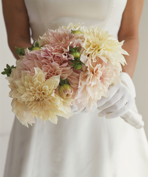 Bride holding bouquet of dahlias