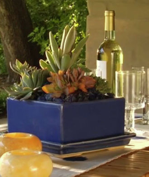 Outdoor succulent centerpiece