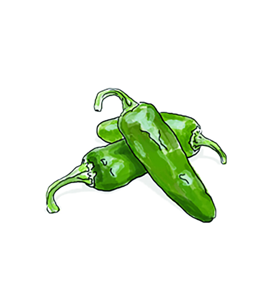 Illustration: Jalapēno