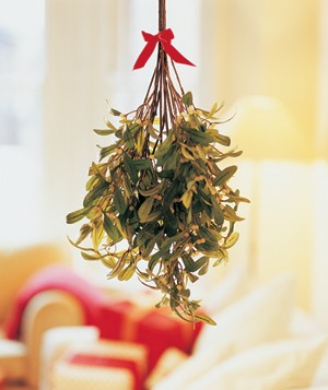New Research Shows Mistletoe Might be Good for More Than Just for Kissing
