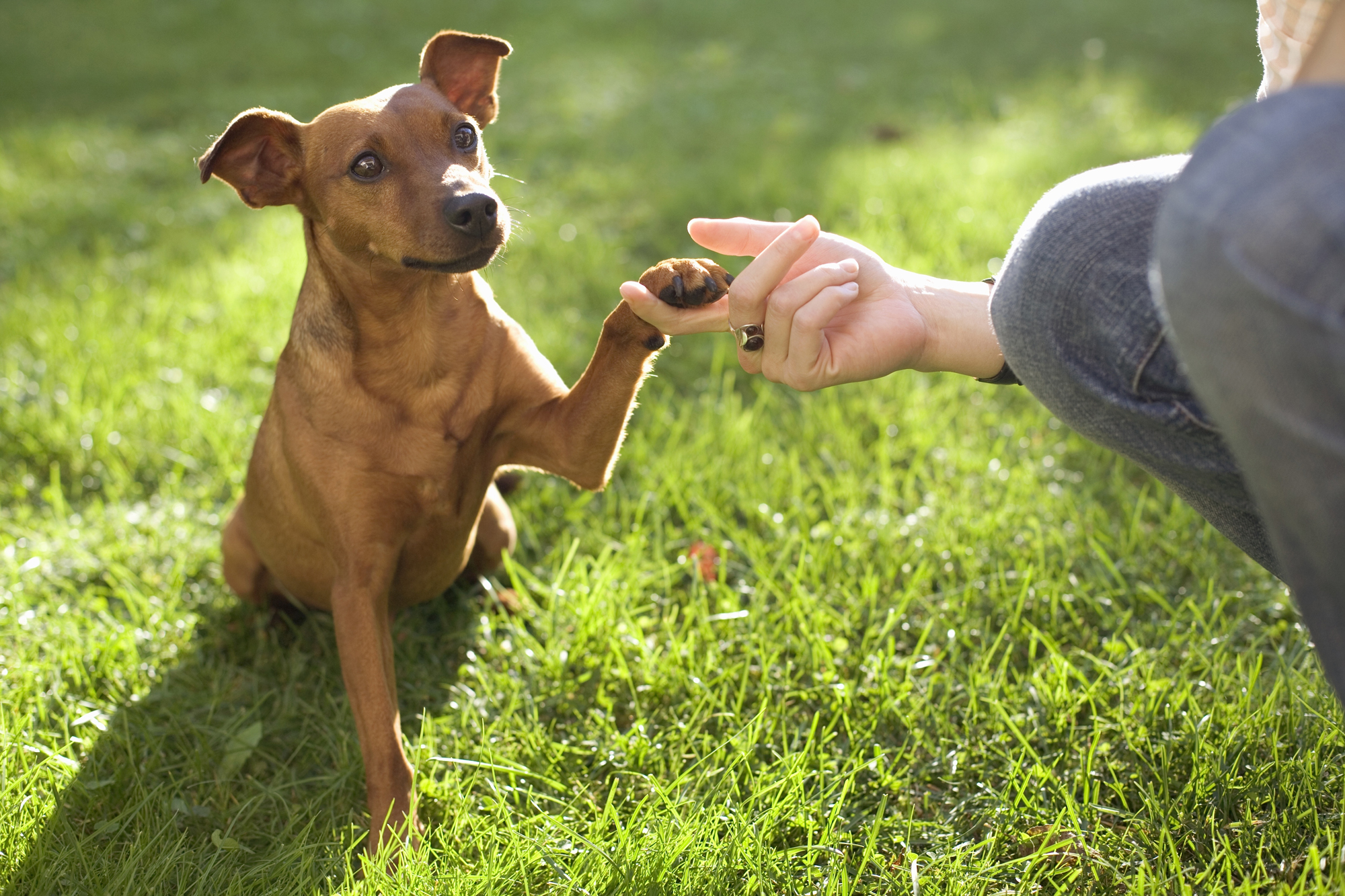 What I Learned About Graciousness, Enthusiasm, andBravery—From My Dog
