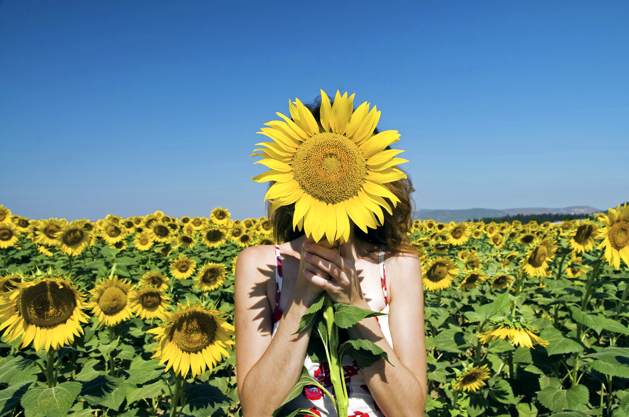 Woman hiding behind sunflower