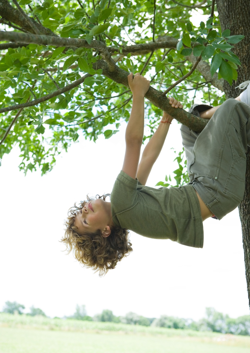 Boy hanging from tree