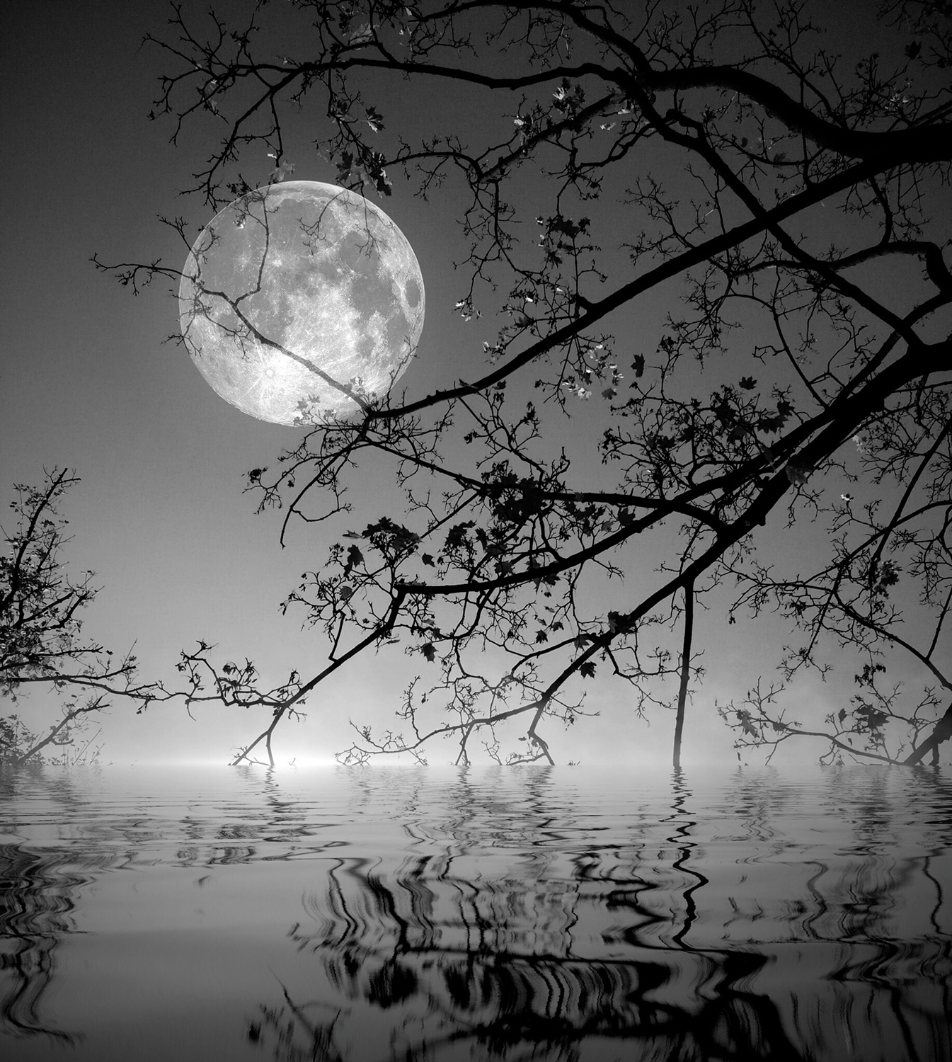 moon-spooky-river-trees