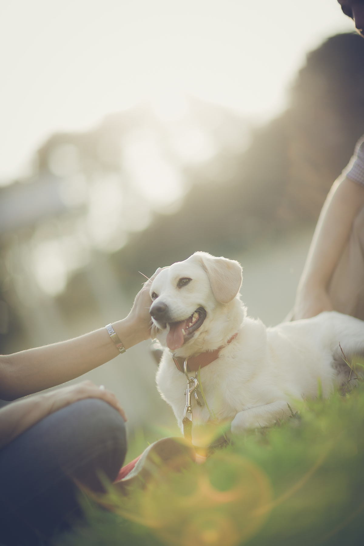 Why Dogs Are Good for More Than Just Snuggling