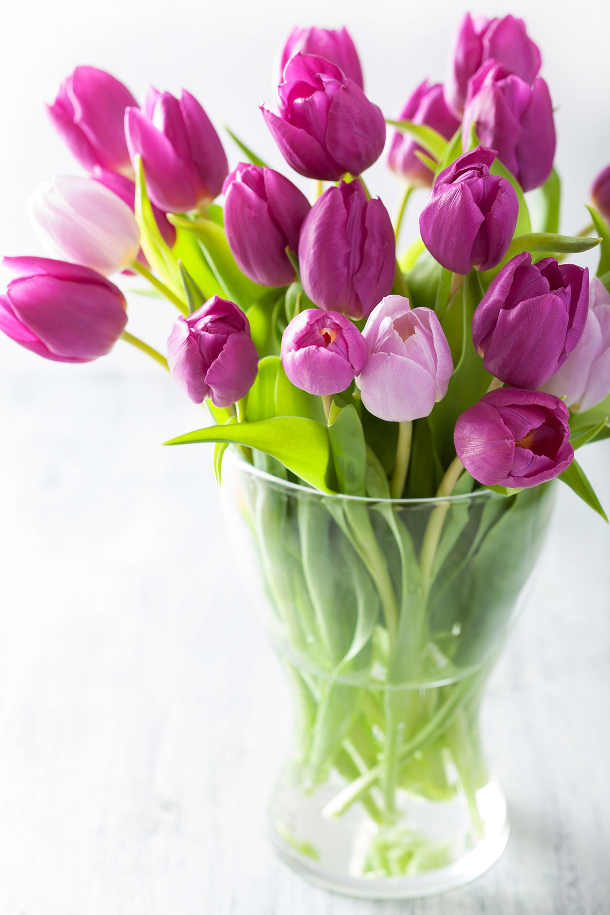how to care for tulips real simple