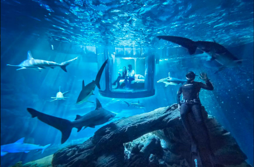 This Airbnb Lets You Sleep With the Sharks… for Free