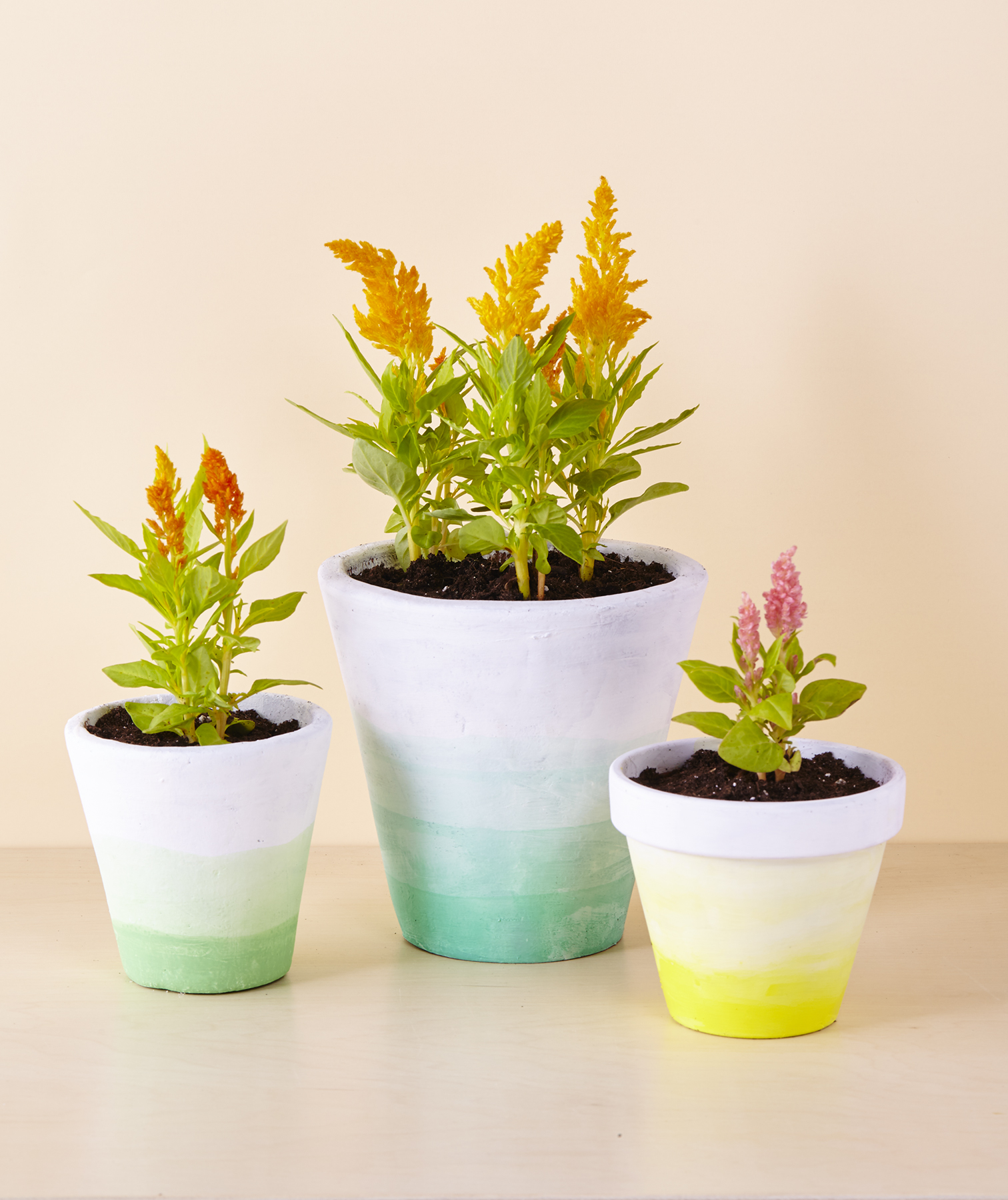 Dip-dyed Terracotta Pots