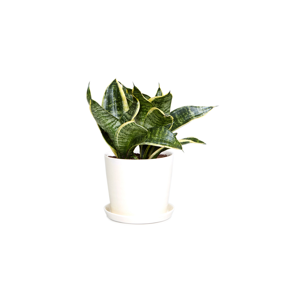 7 Office Plants You Won T Kill Real Simple