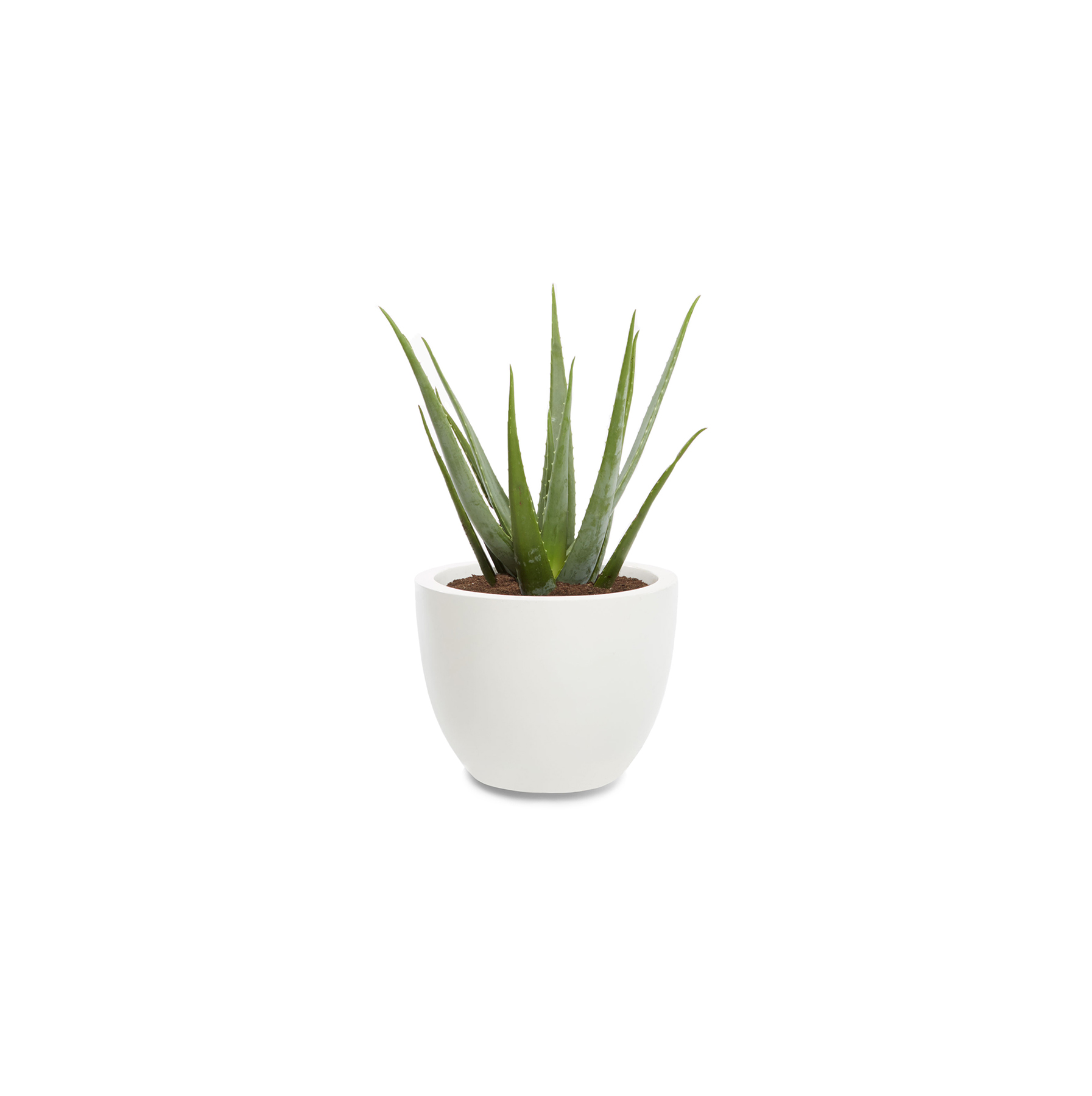 great office plants. You\u0027ll Only Want To Own One Of These Plants If Your Office Gets A Lot Sunlight. However, You Constantly Forget Water This Is Great