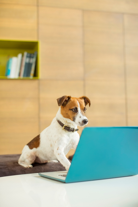positive-impact-pets-workplace