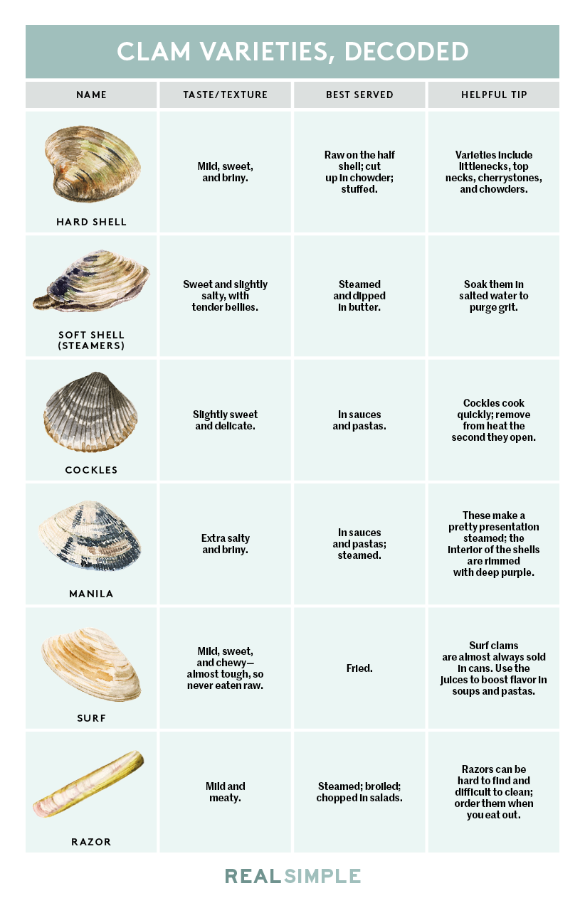Types of Clams, Decoded