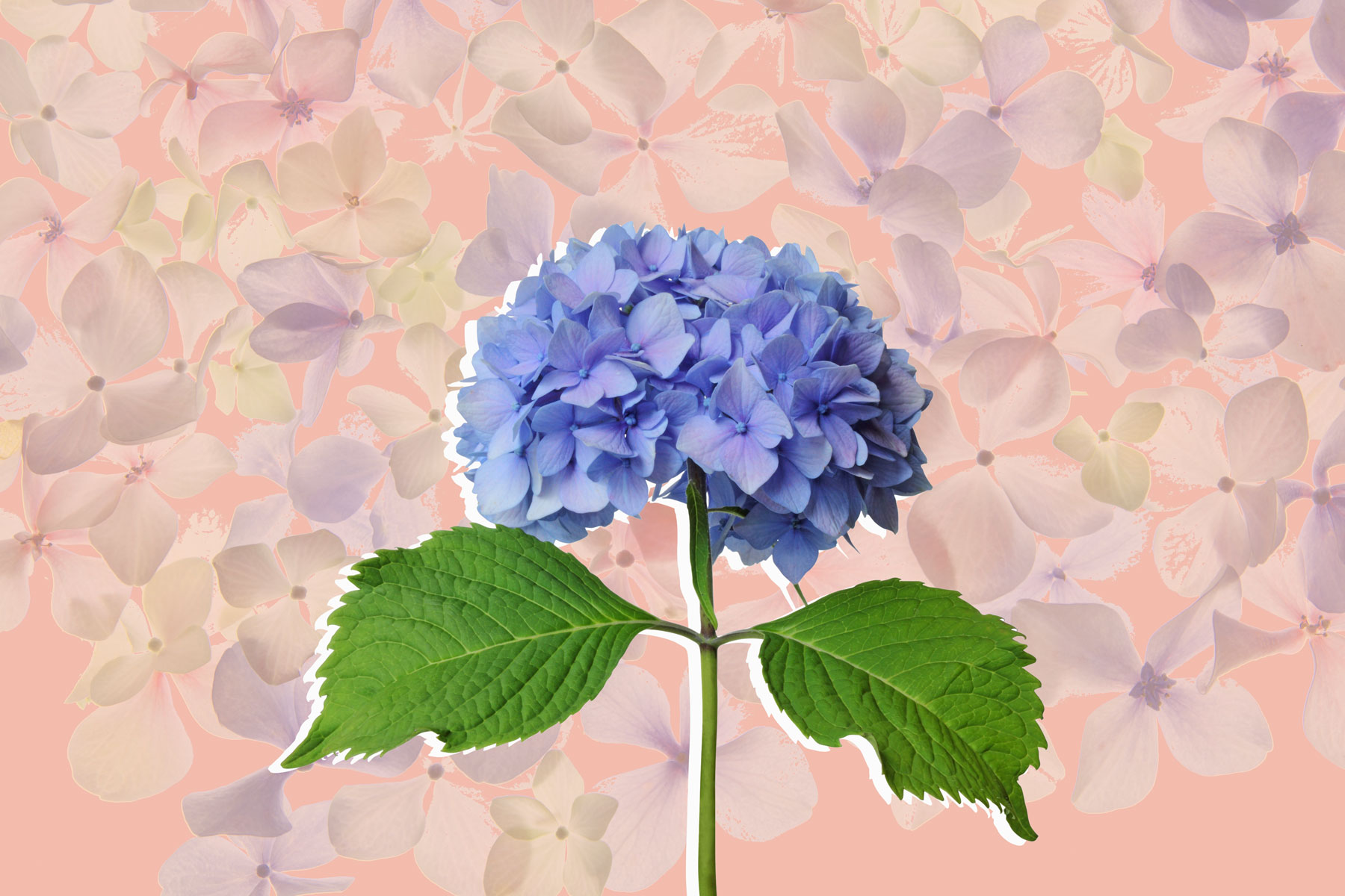 How to Care for Hydrangeas to Get the Most Beautiful Blooms on the Block