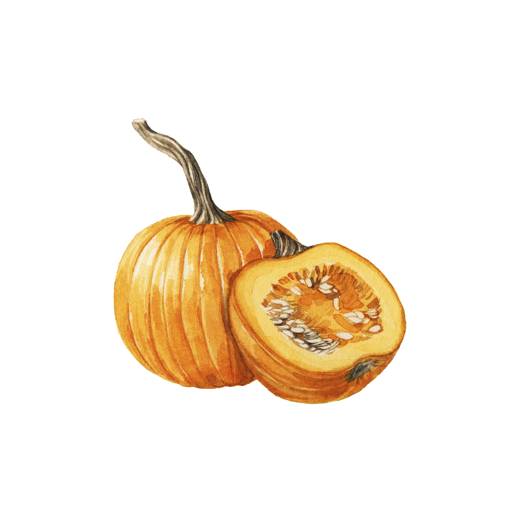 Illustration: pumpkin cut in half