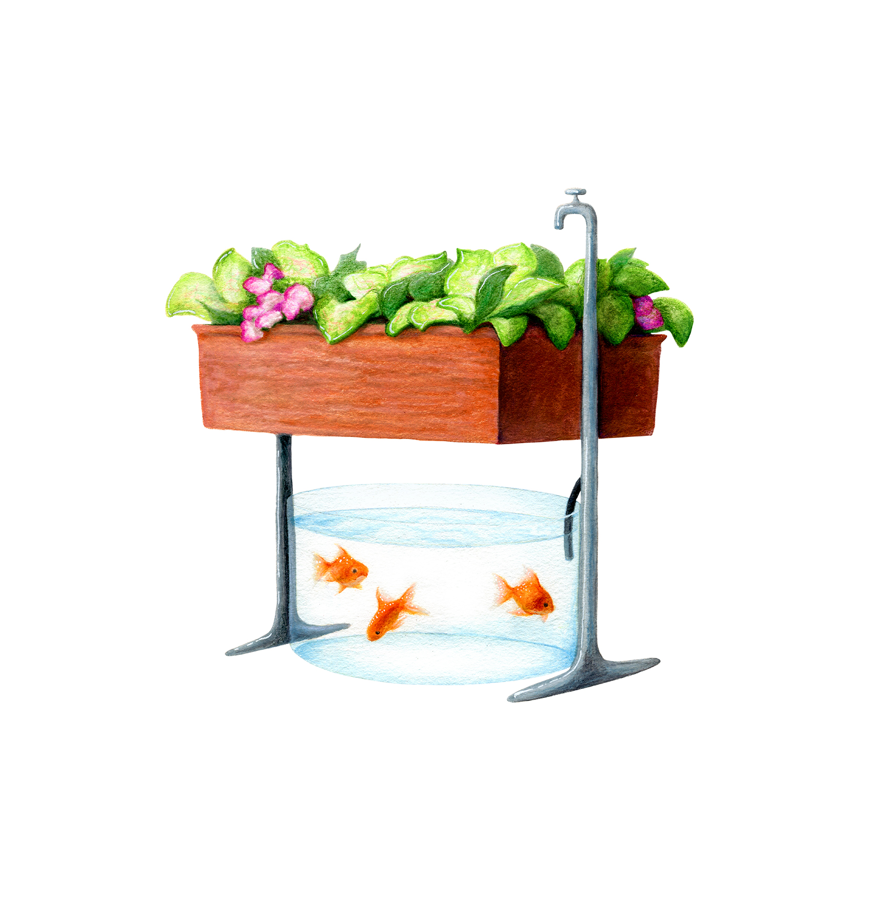 Illustration: aquaponics setup