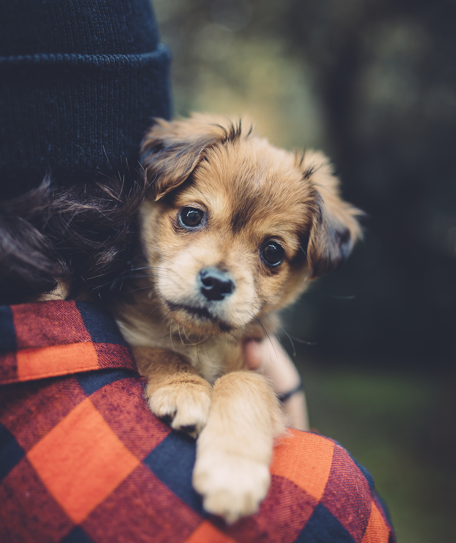 Puppy on woman's shoulder