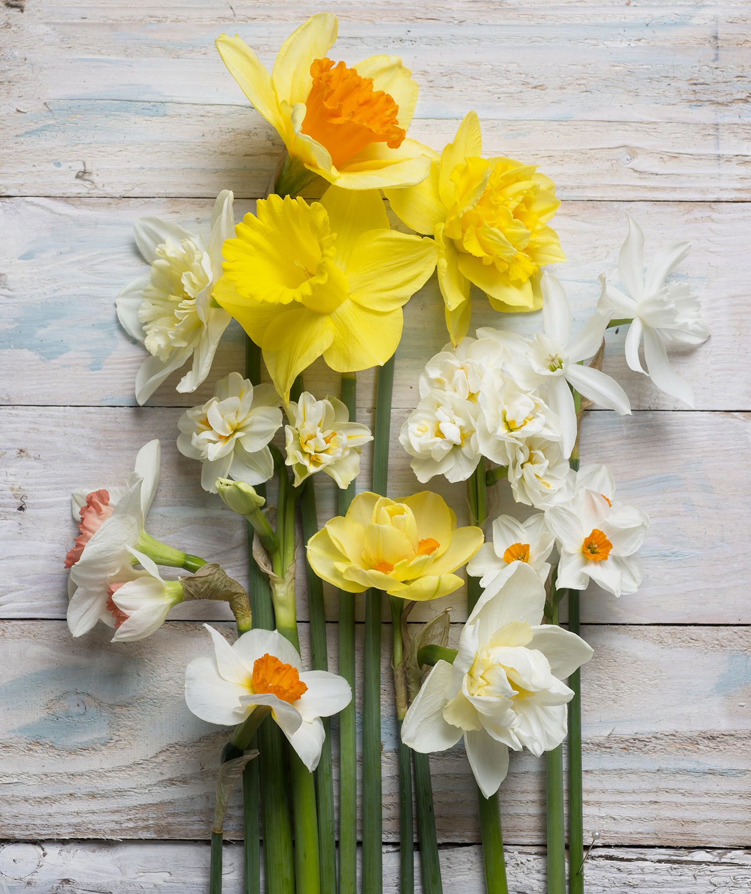 Your guide to easter flowers real simple cut daffodils mightylinksfo