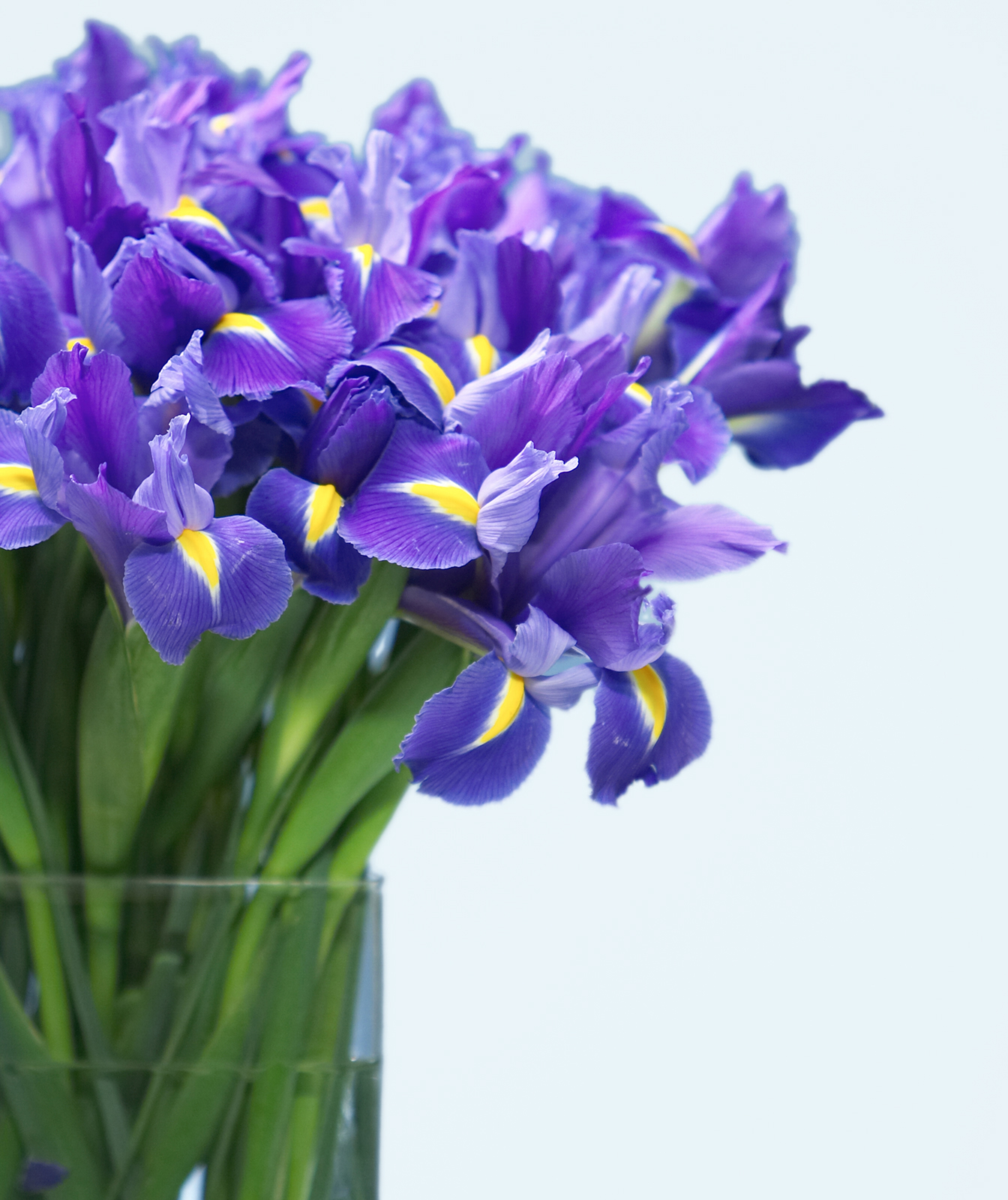 your guide to easter flowers  real simple, Natural flower