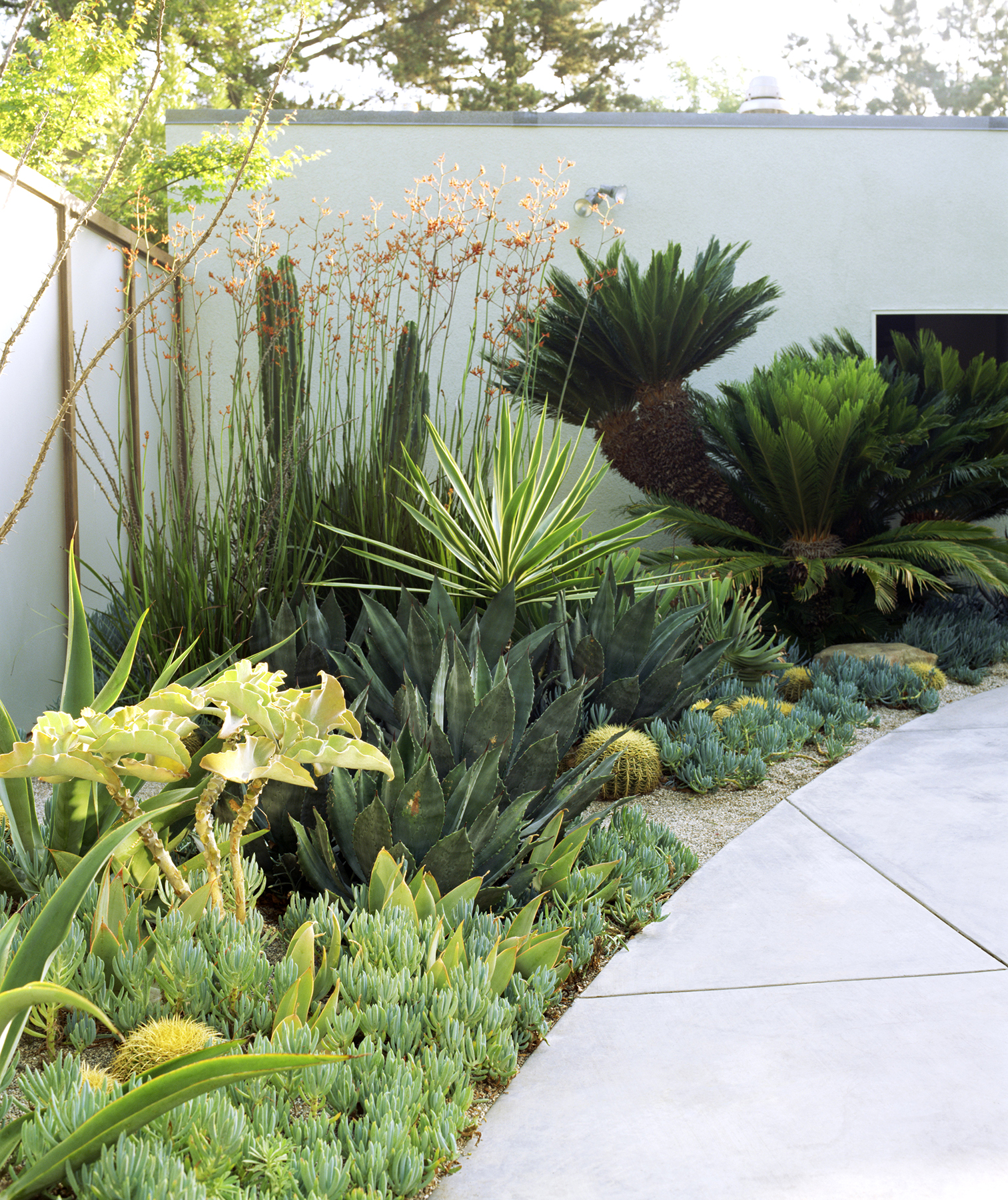 "What You Need to Know About ""Xeriscaping""—the Popular Gardening Trend"