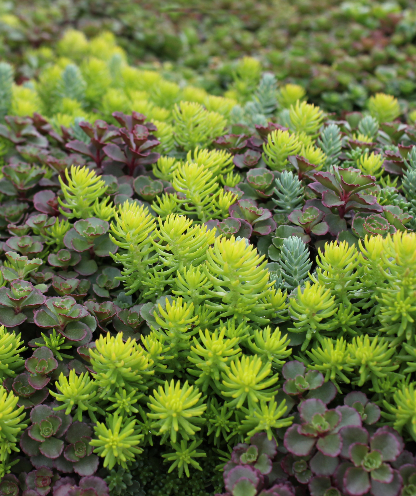 15 Impossible-to-Kill Outdoor Plants