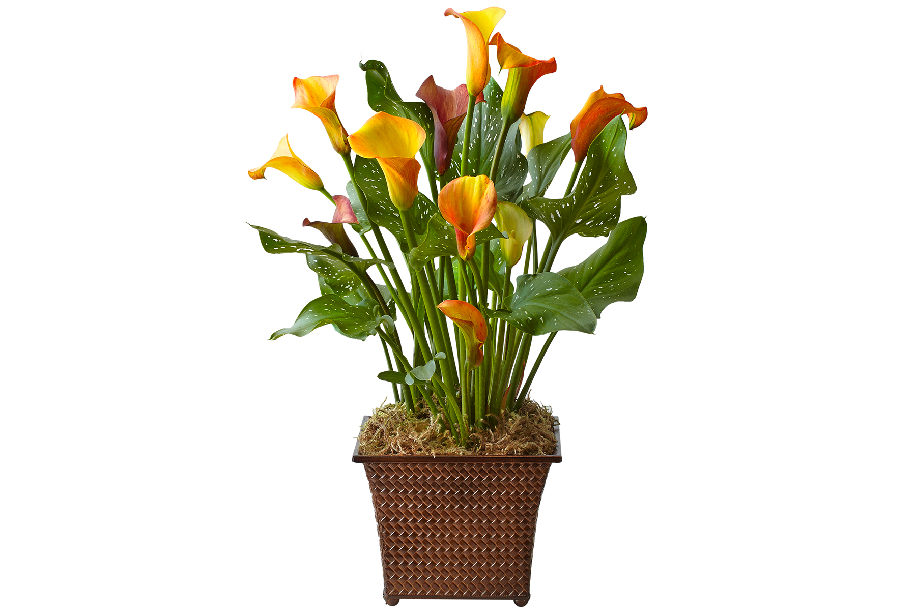 Fall Calla Lily Bouquet