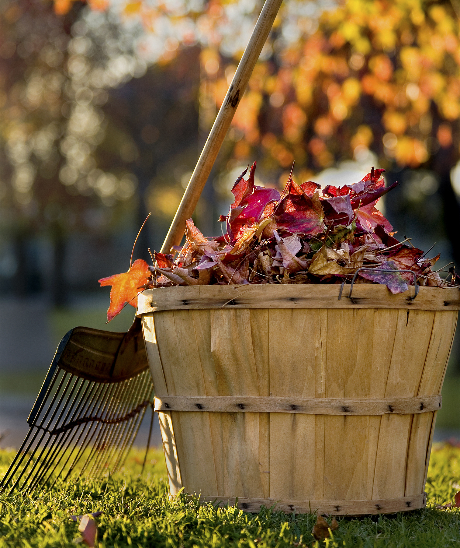 Raked leaves in a wood bucket