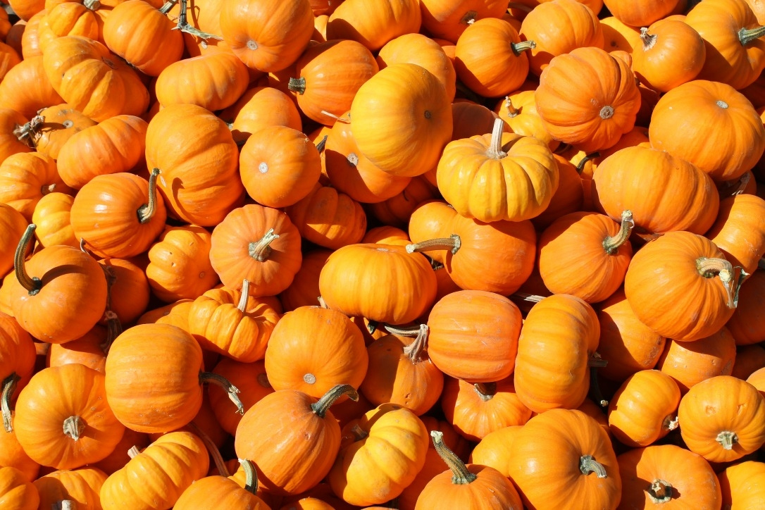 why pumpkin is a fruit and not a vegetable real simple