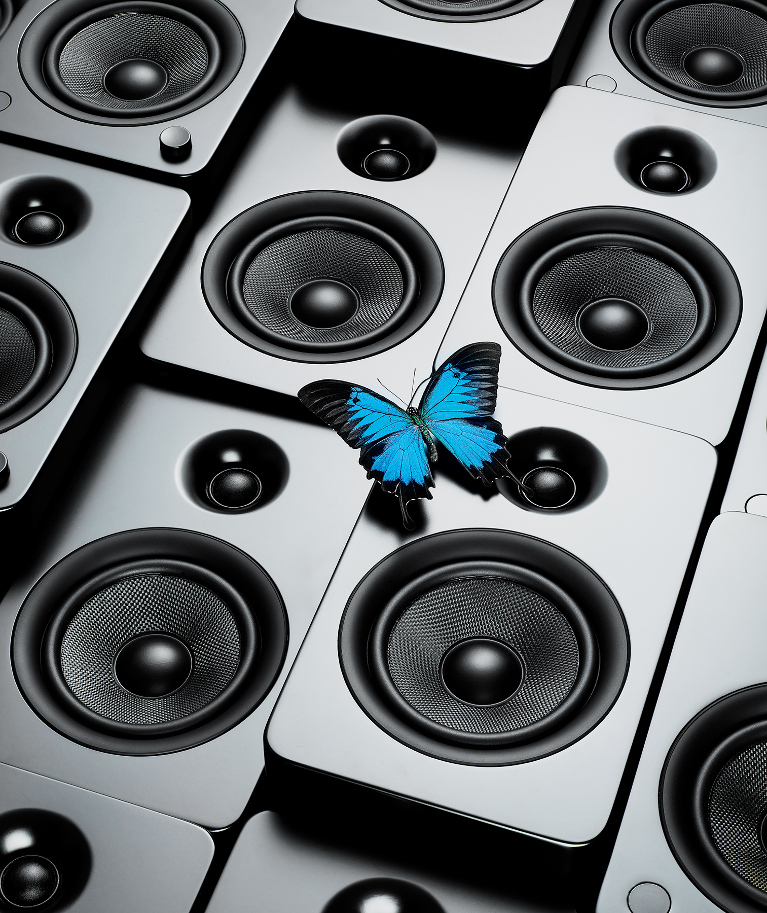 Blue butterfly on speakers