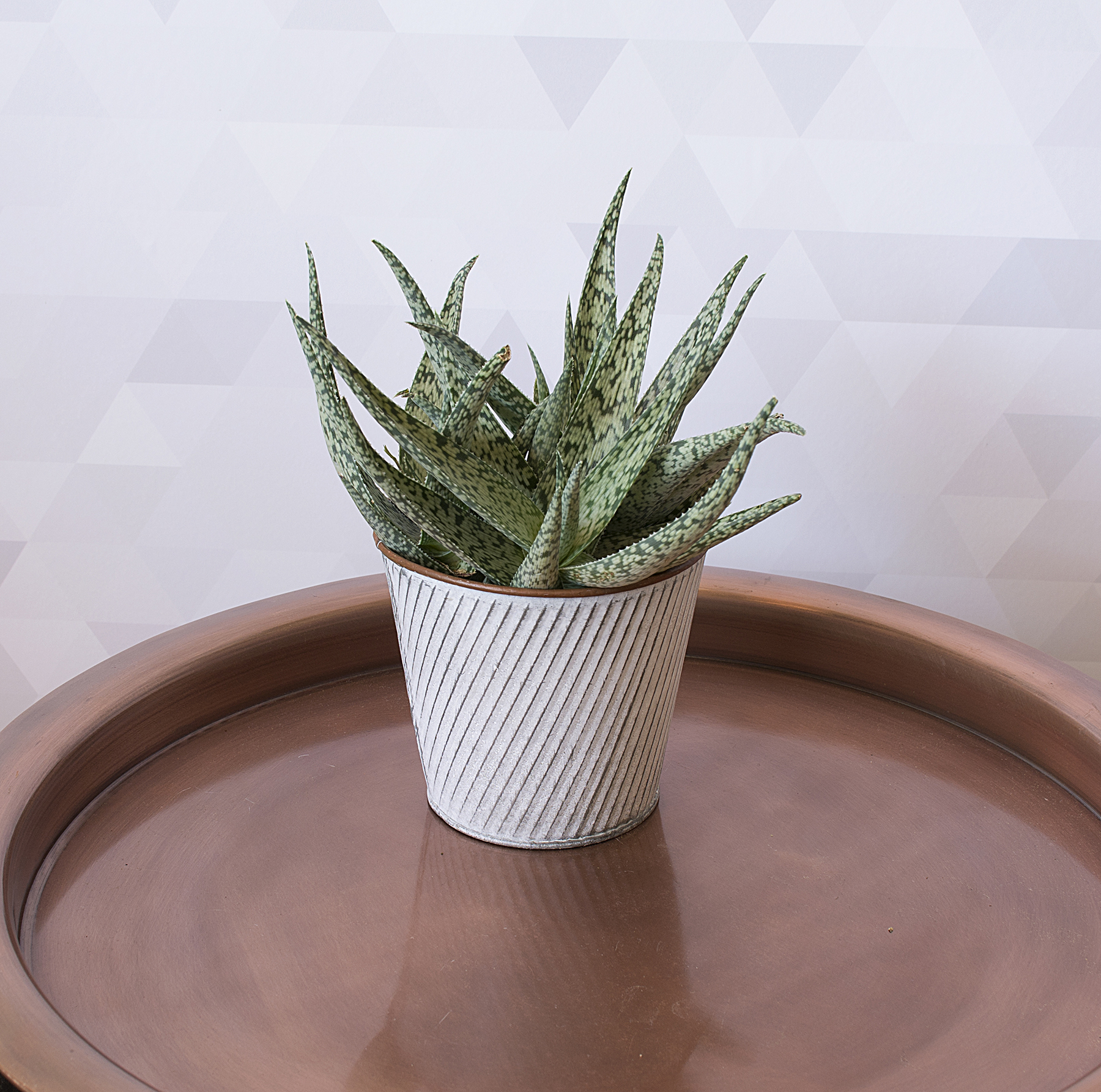 In a Dry Room: Aloe