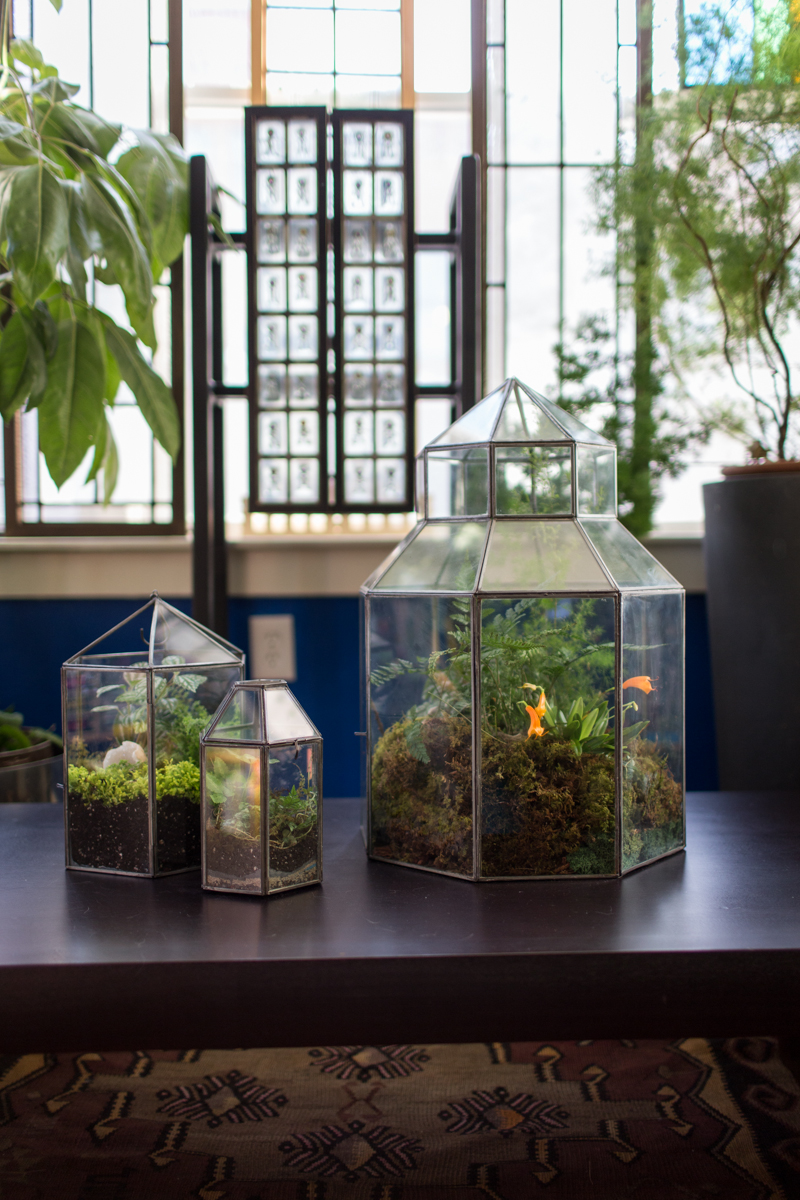 In a Drafty Room: Moss Terrarium