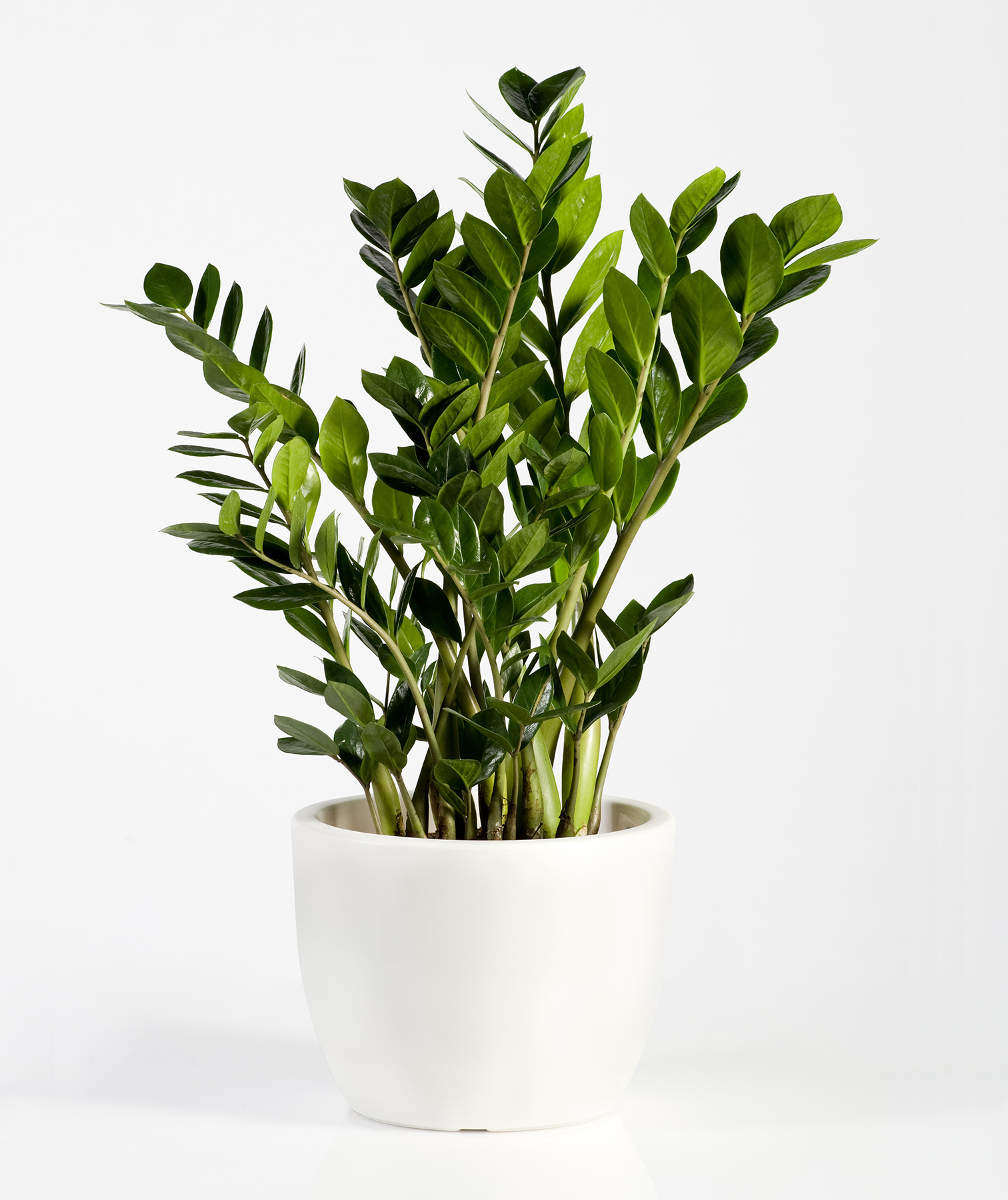 14 Hardy Houseplants That Will Survive the Winter | Real Simple on bedding plants that like shade, indoor plants that like shade, climbing plants that like shade, desert plants that like shade, blooming plants that like shade, house plants that thrive in shade, vegetable plants that like shade, vining plants that like shade, tropical plants that like shade, pool equipment cover for shade, house plants that like sun, flowering plants that like shade, patio plants that like shade,