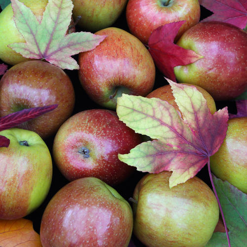 This Super Simple Household Item Gets Pesticides Off Apples, Study Says