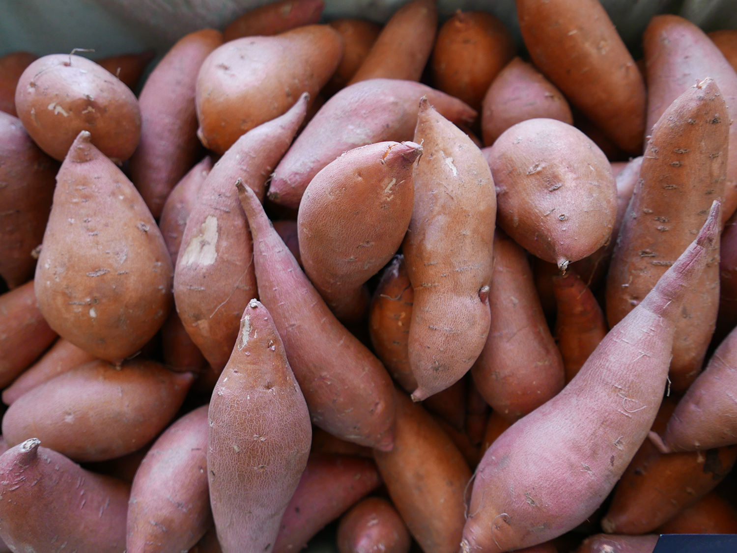 Close-up of Sweet Potato