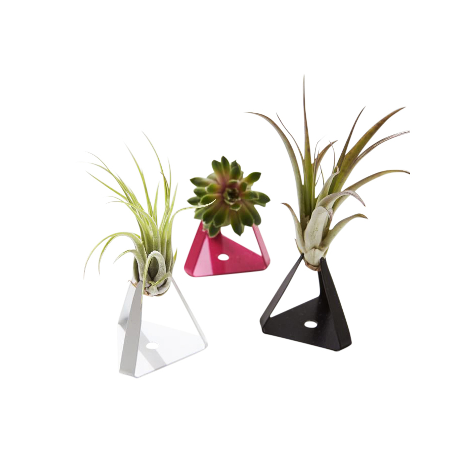The Sill Planter + Air Plant - The Tillandz