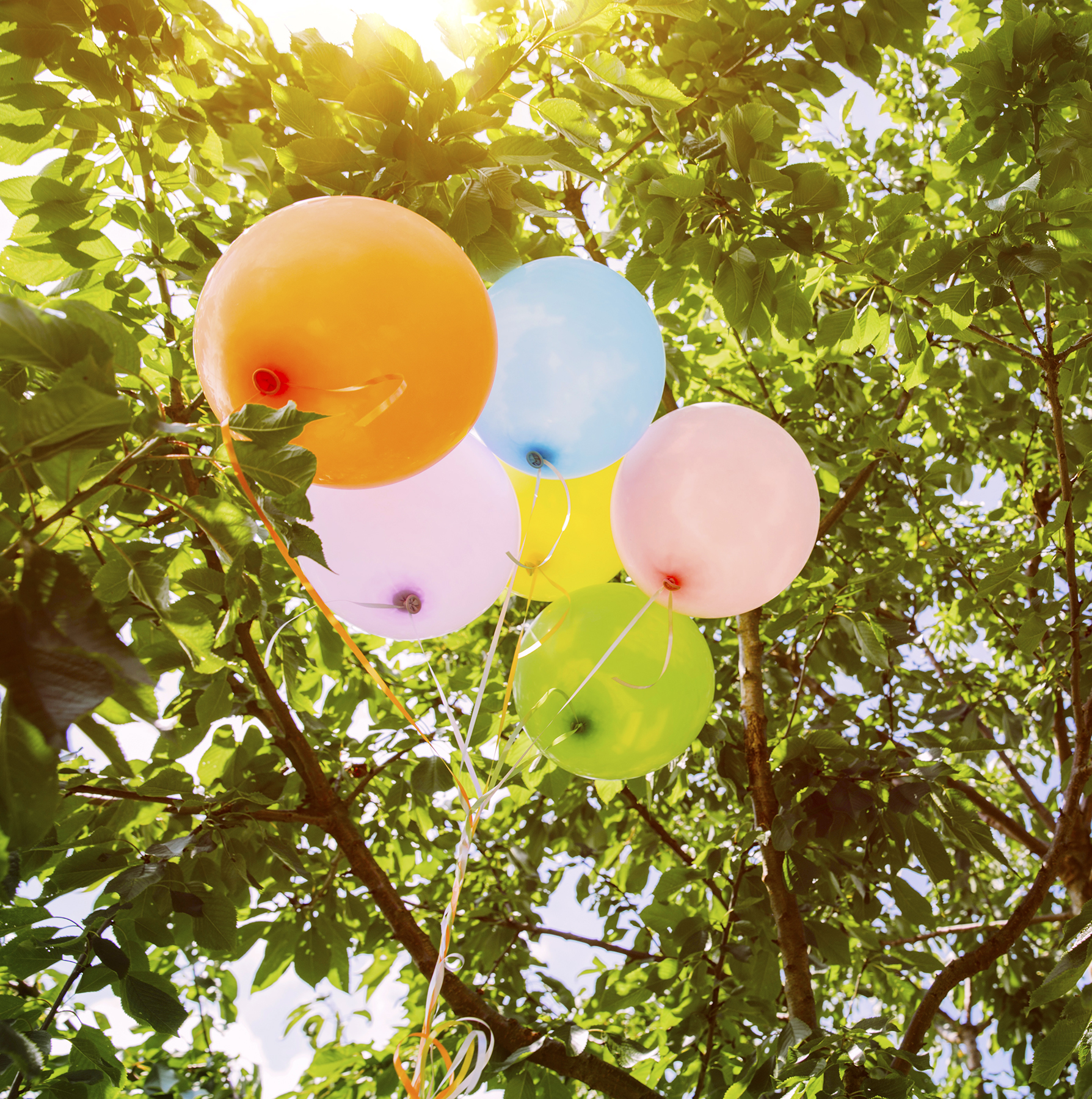Balloons in tree