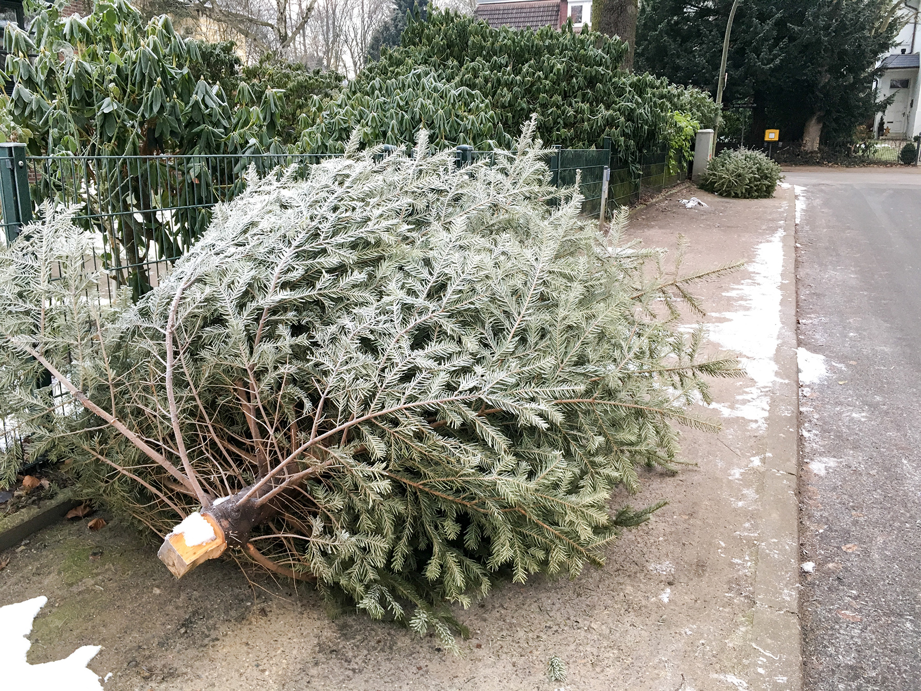 christmas-tree-curb