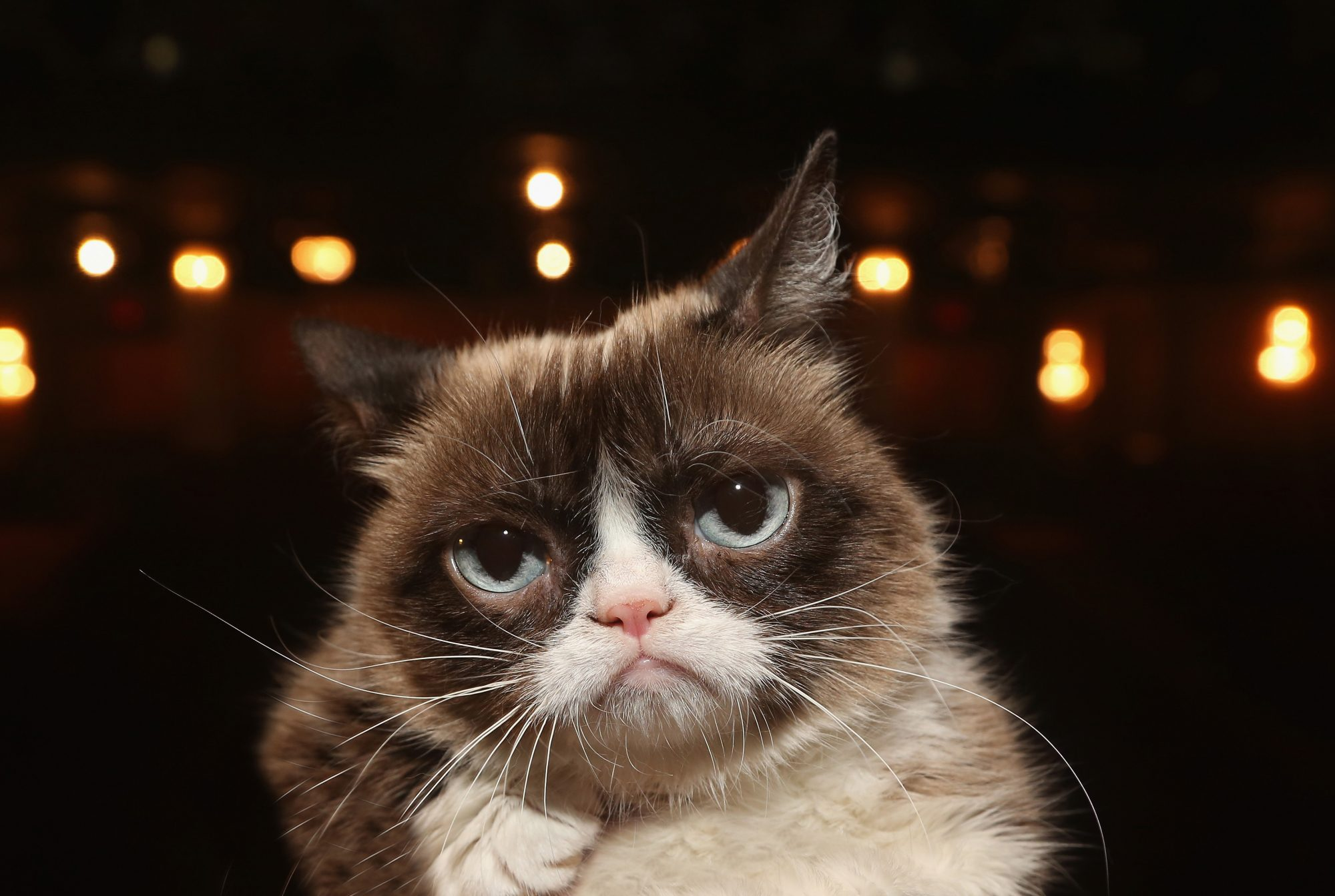 grumpy cat just won a major lawsuit real simple. Black Bedroom Furniture Sets. Home Design Ideas