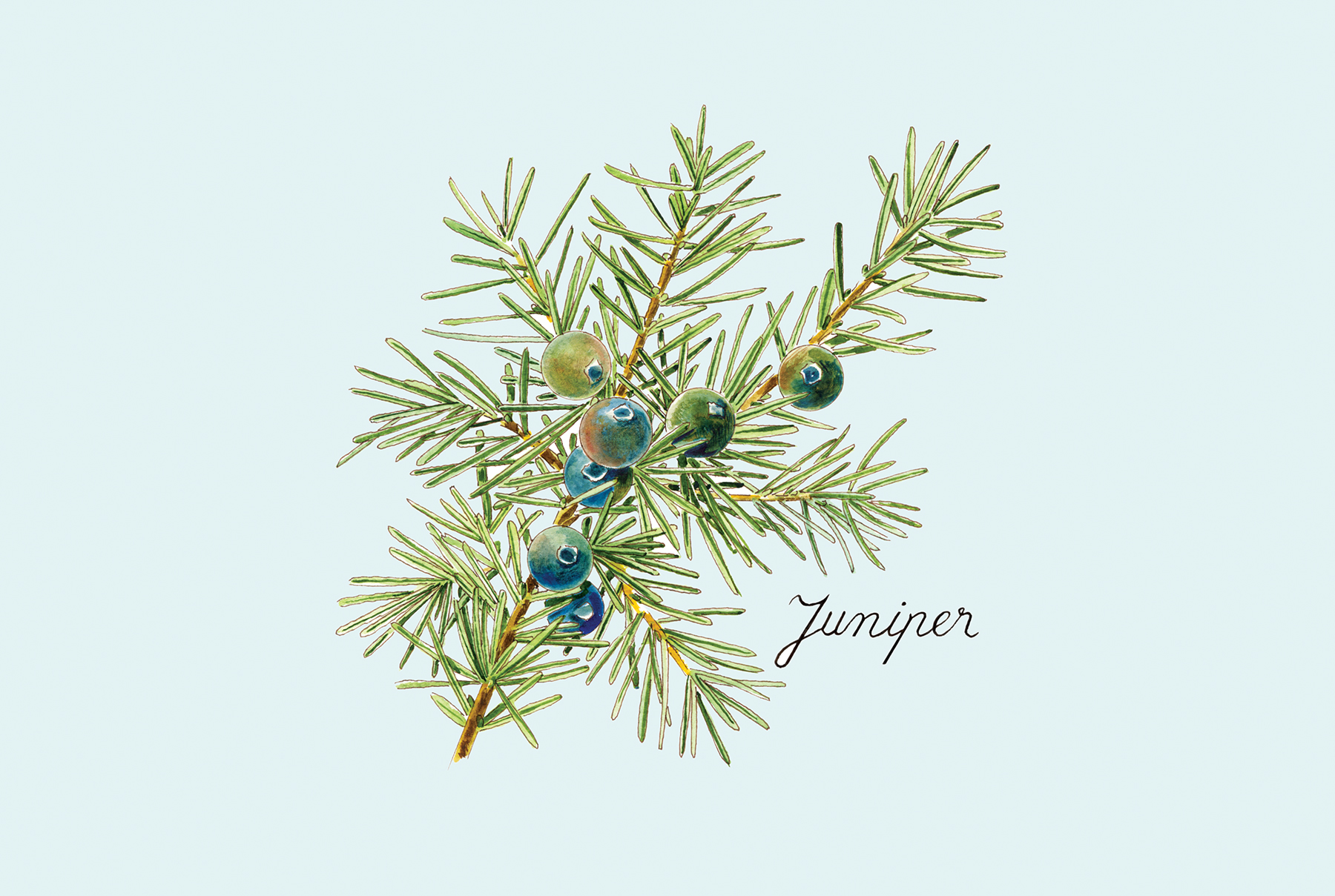 Juniper: Controls Oil