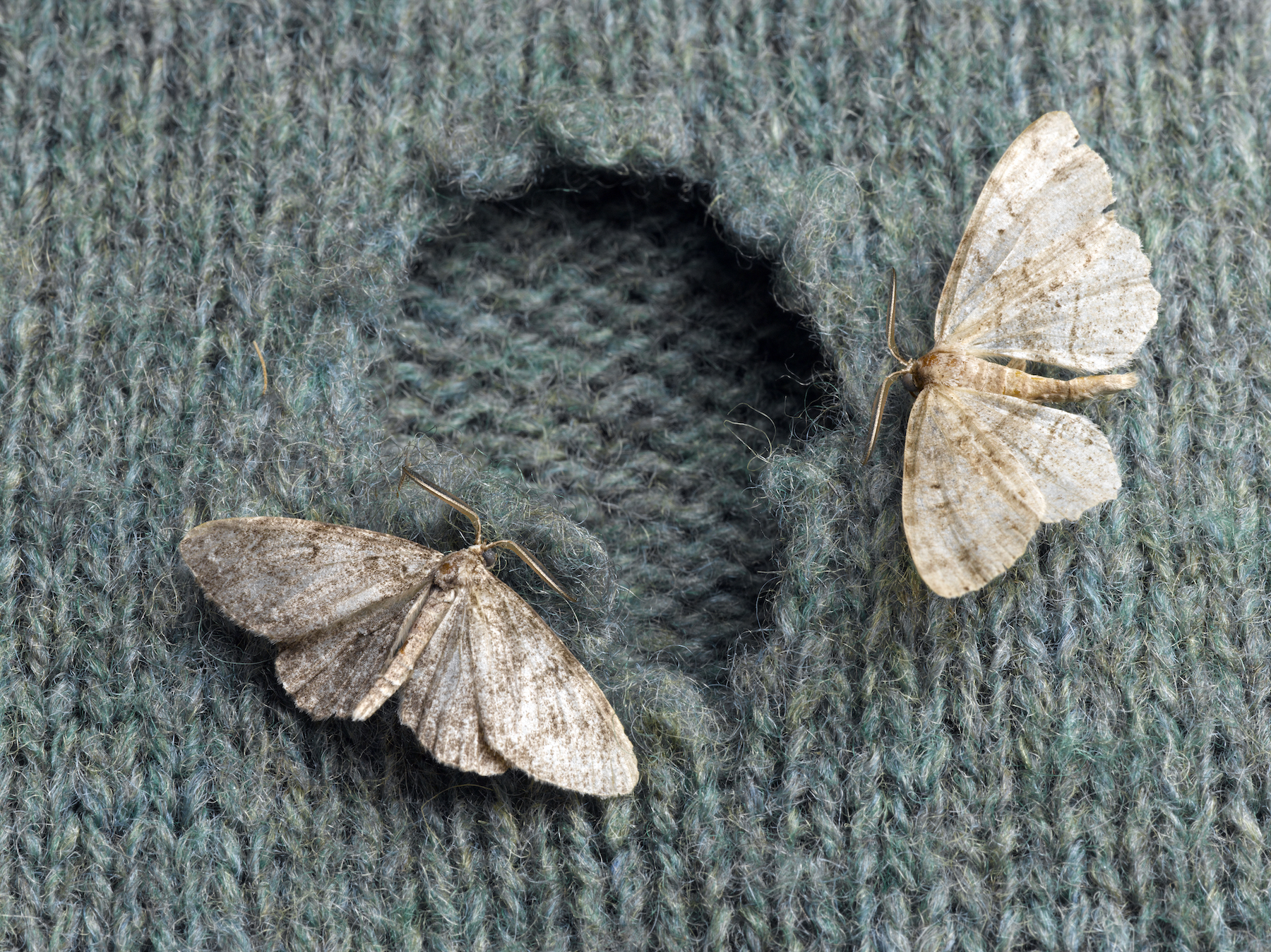 moth holes in clothes