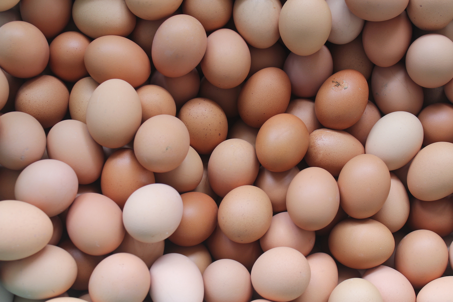 how does salmonella get into eggs real simple