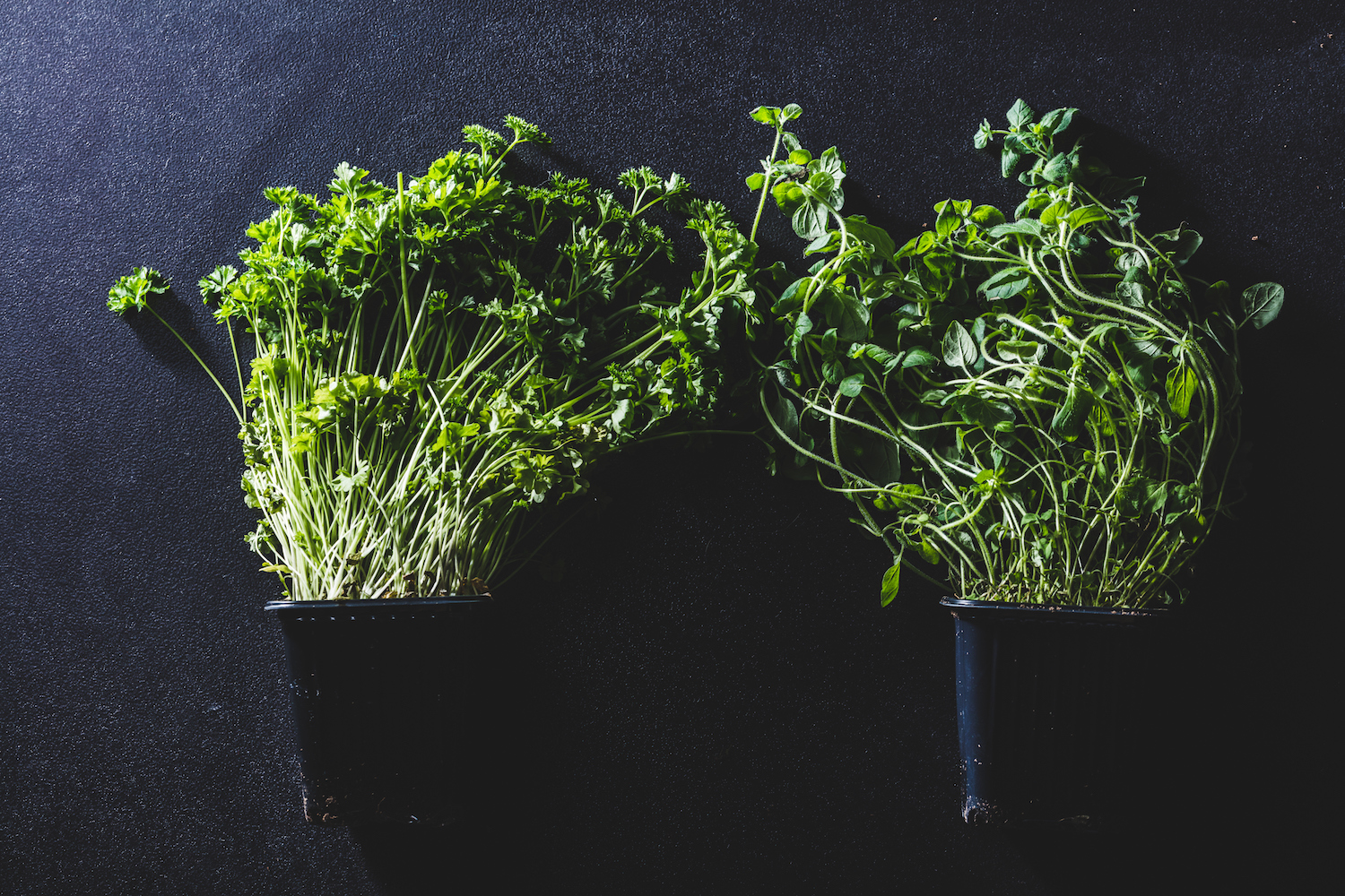These Indoor Gardens for Growing Fresh Veggies and Herbs Year-Round