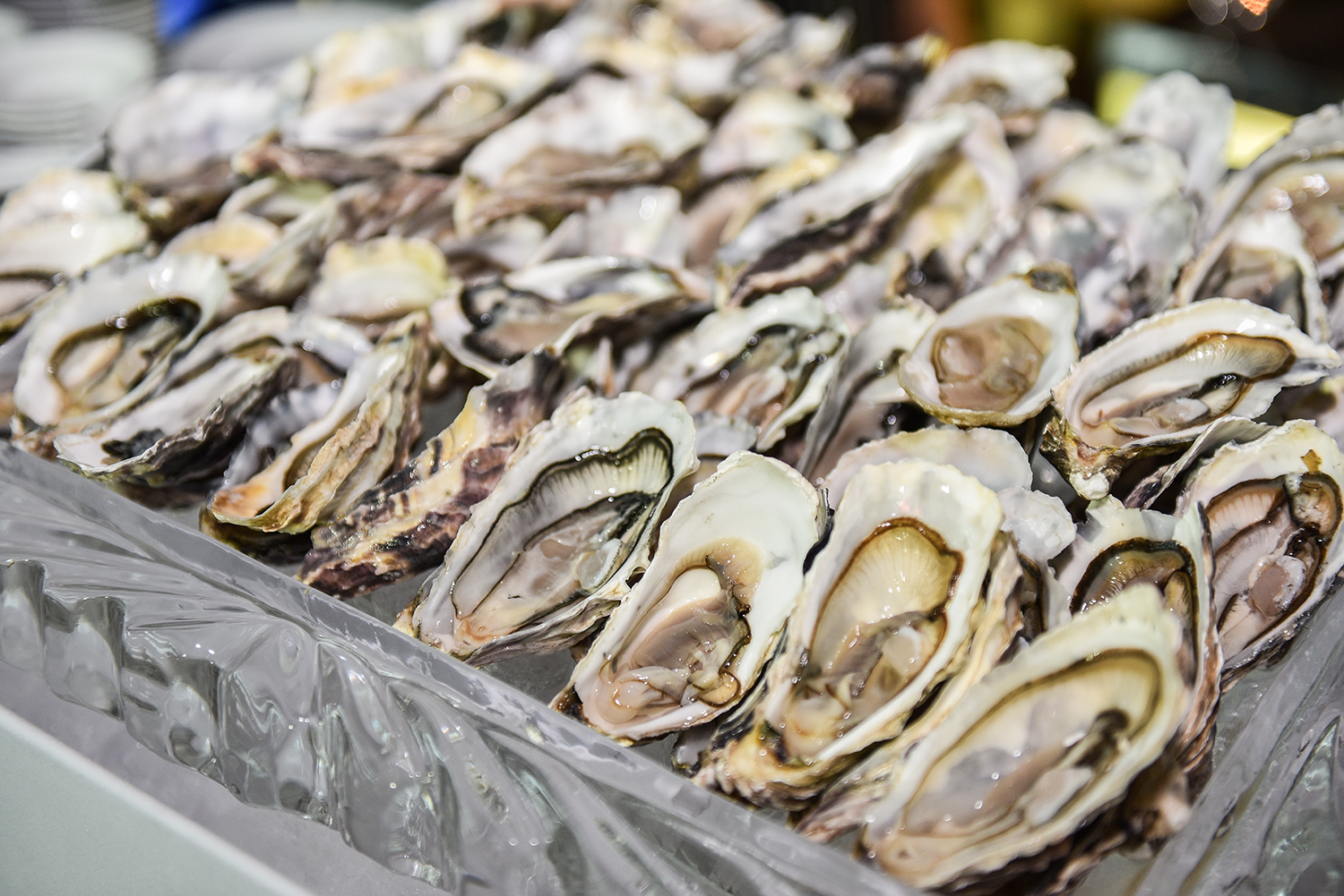 Oysters in a Half Shell