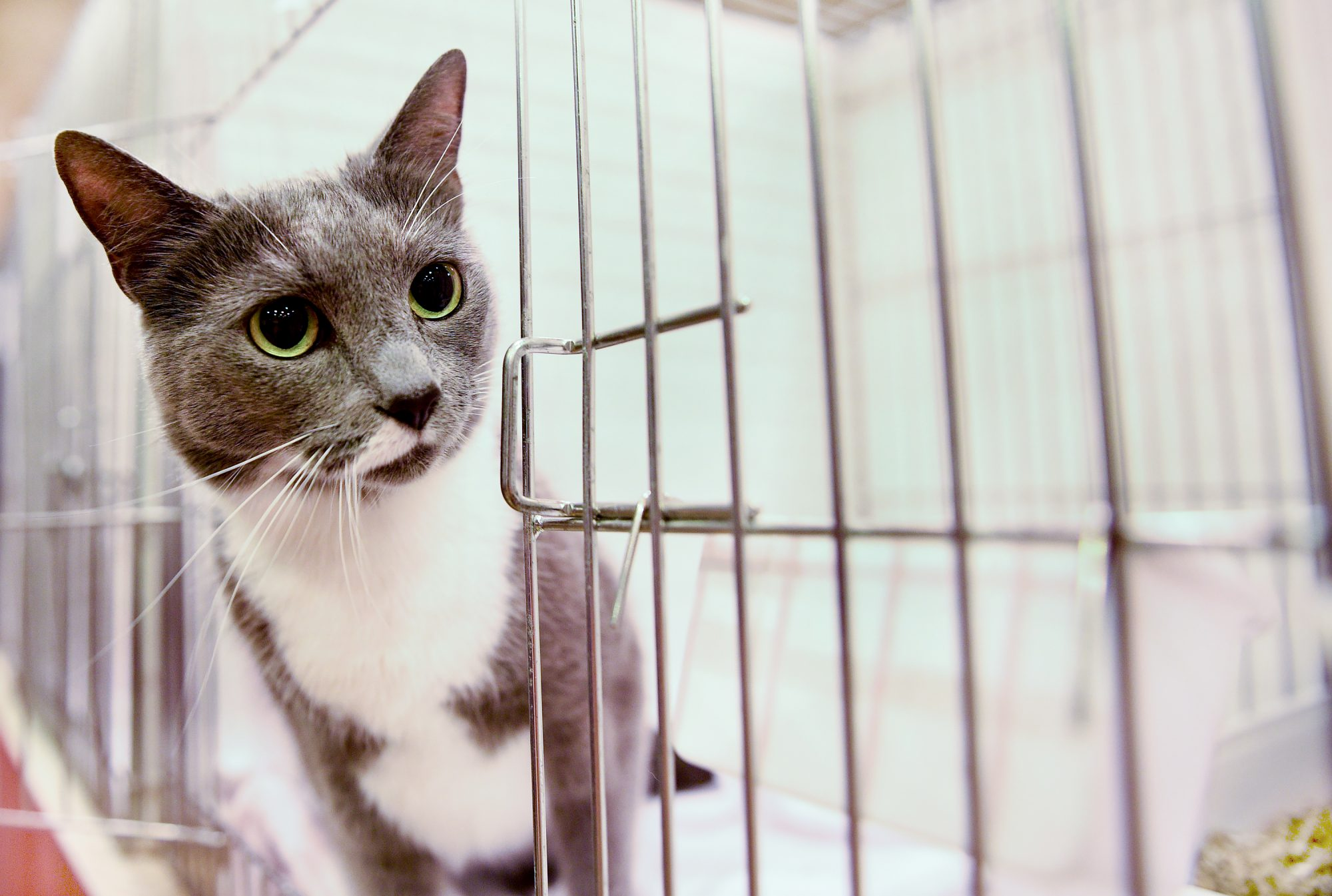 Cat in Shelter