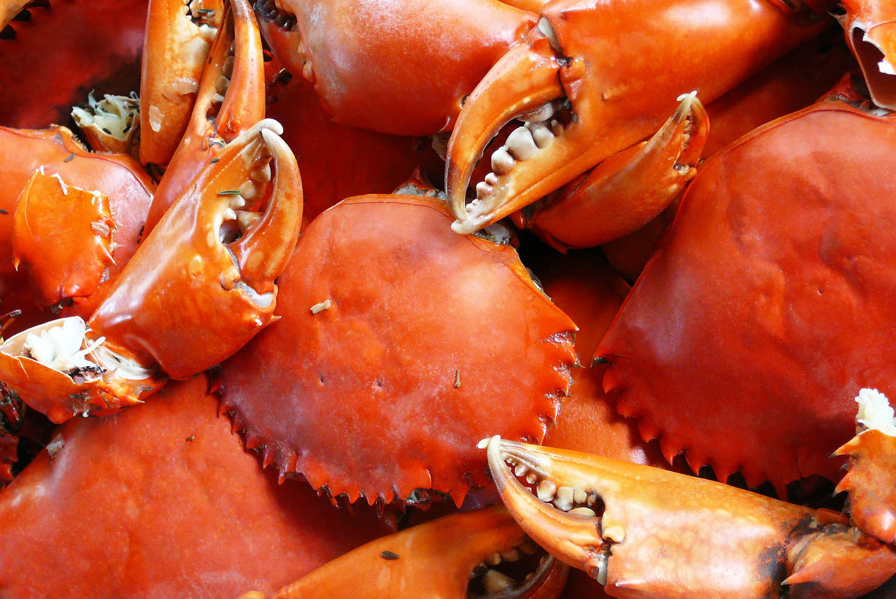 Close up of steamed crabs