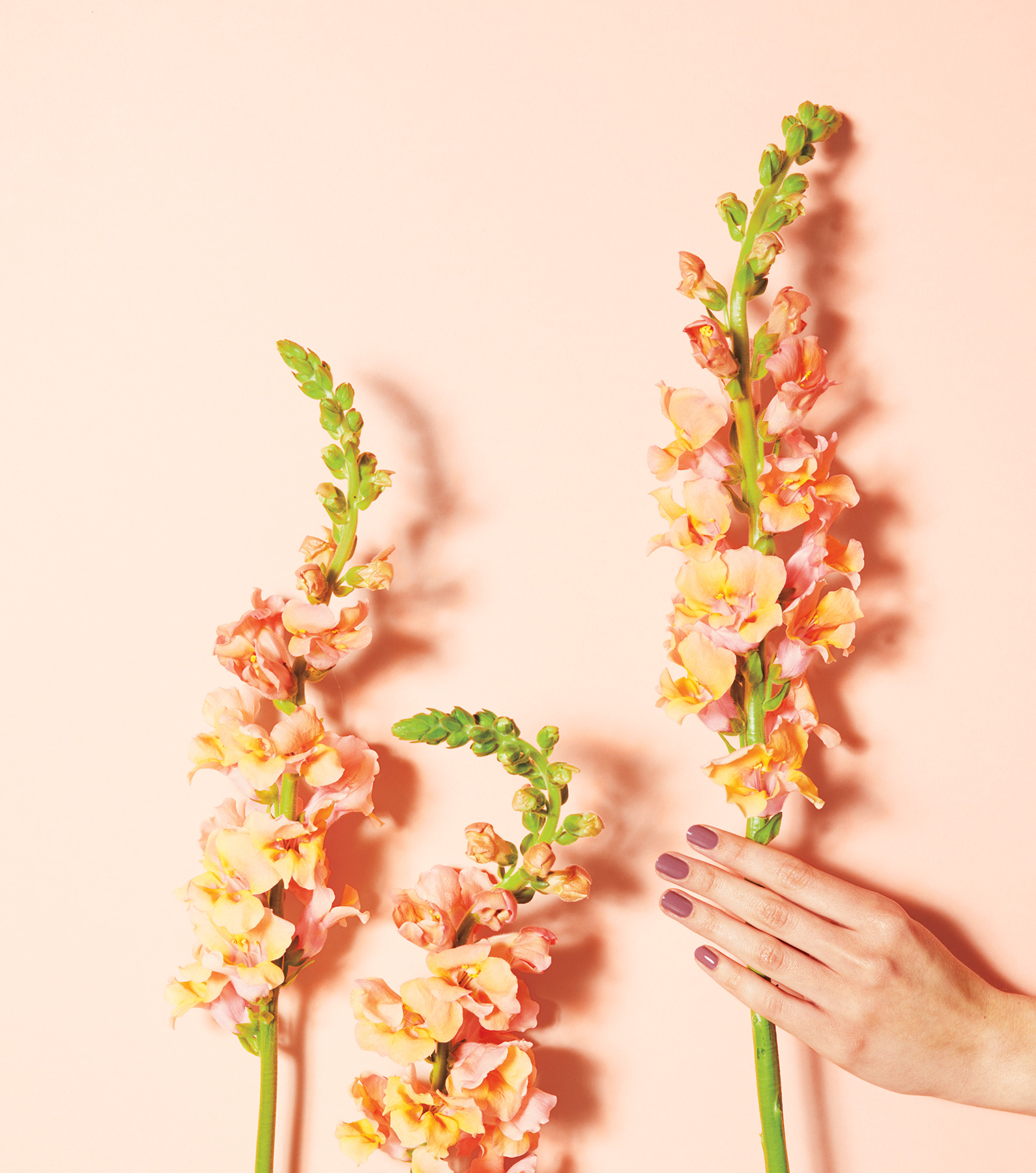 Manicured hand on light peach background