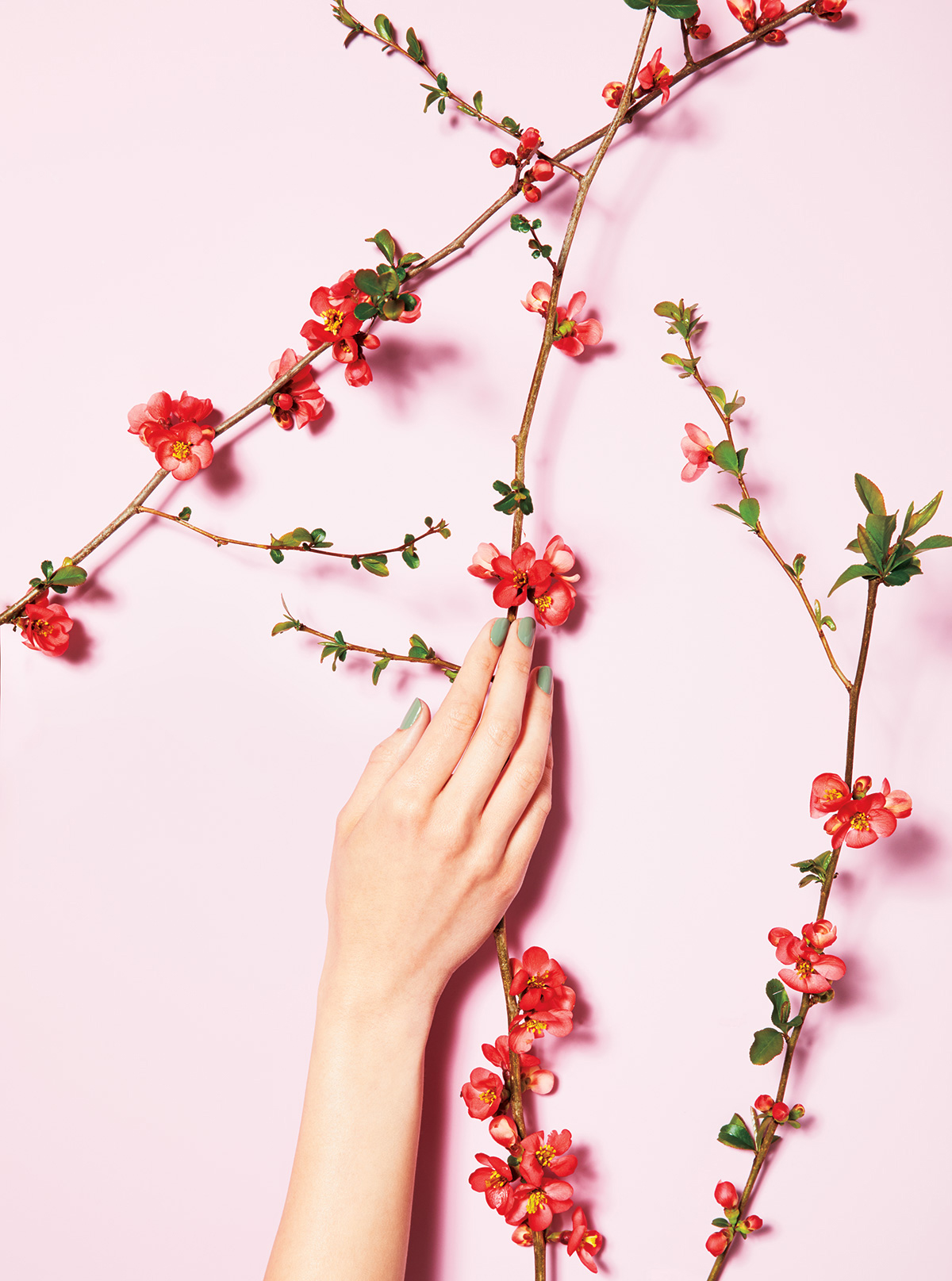 Manicured hand on light pink background