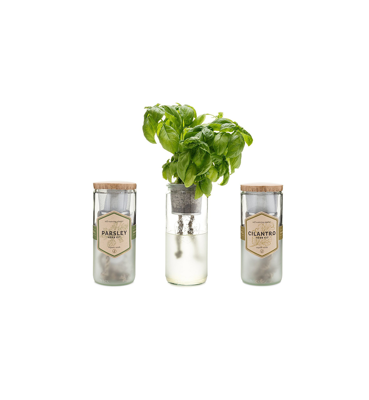 Herb Kits For Indoors: This Indoor Herb Garden Kit Makes Growing Basil