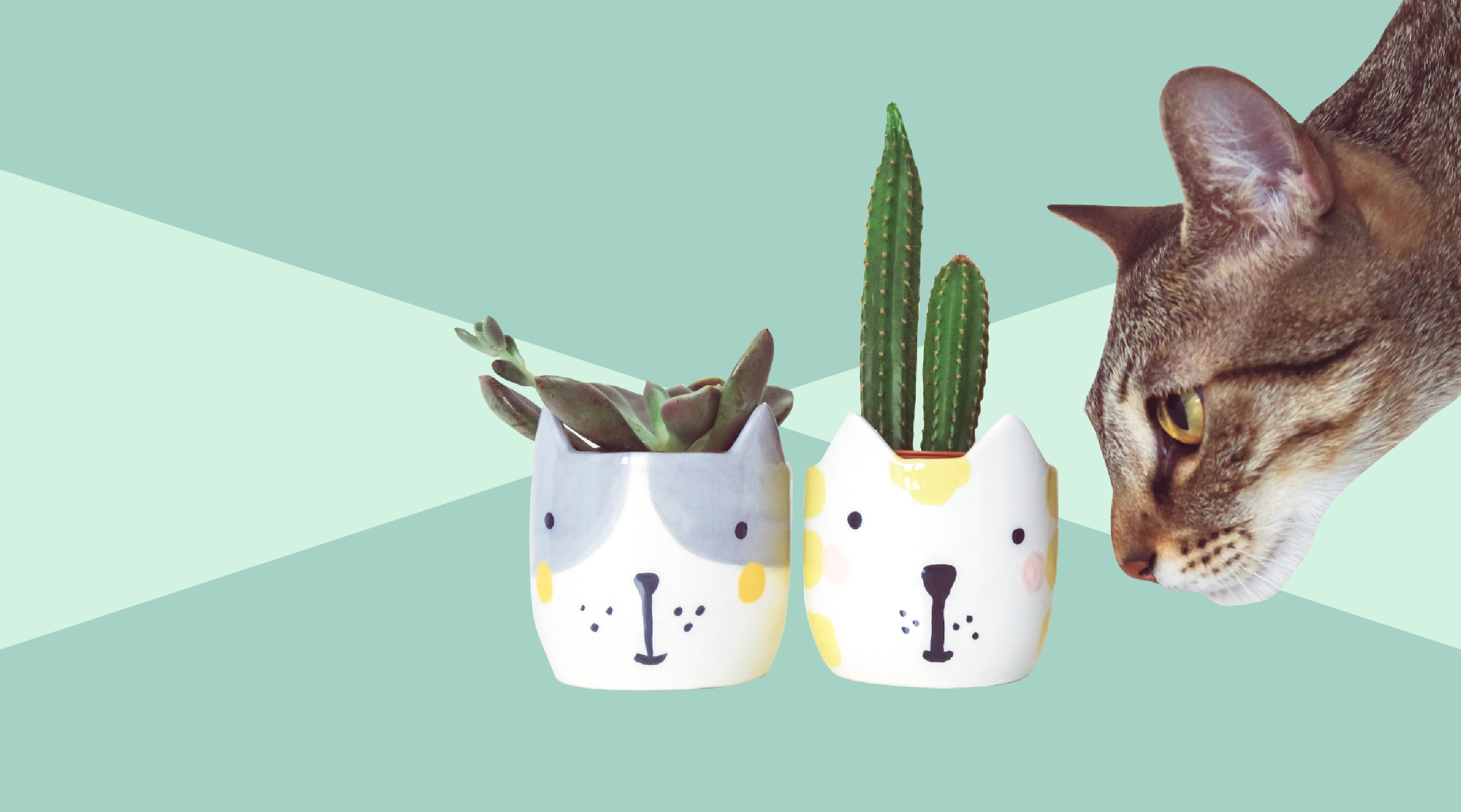 Pet Safe Houseplants Tout