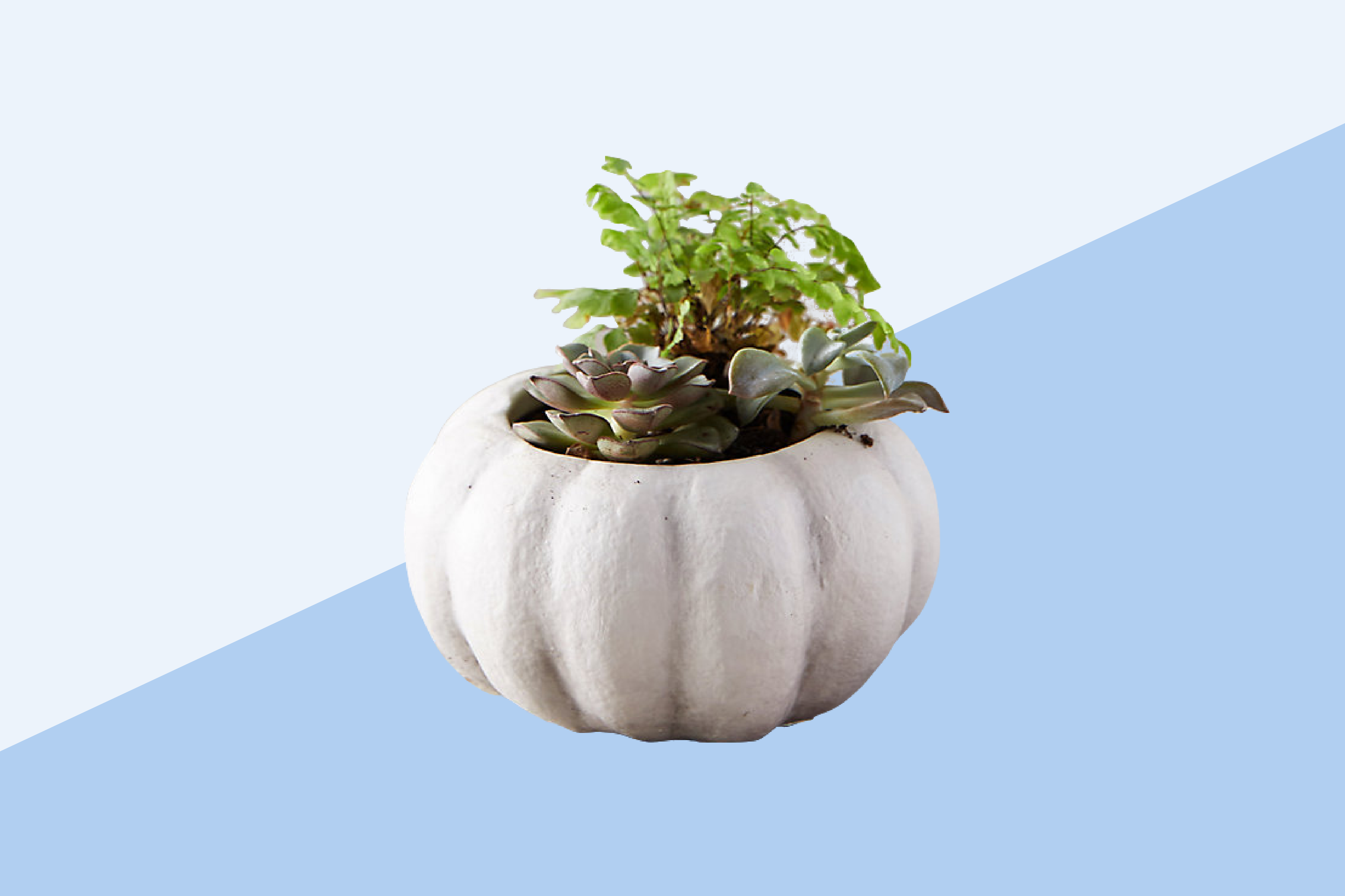How to Care for Potted Plants - Real Simple