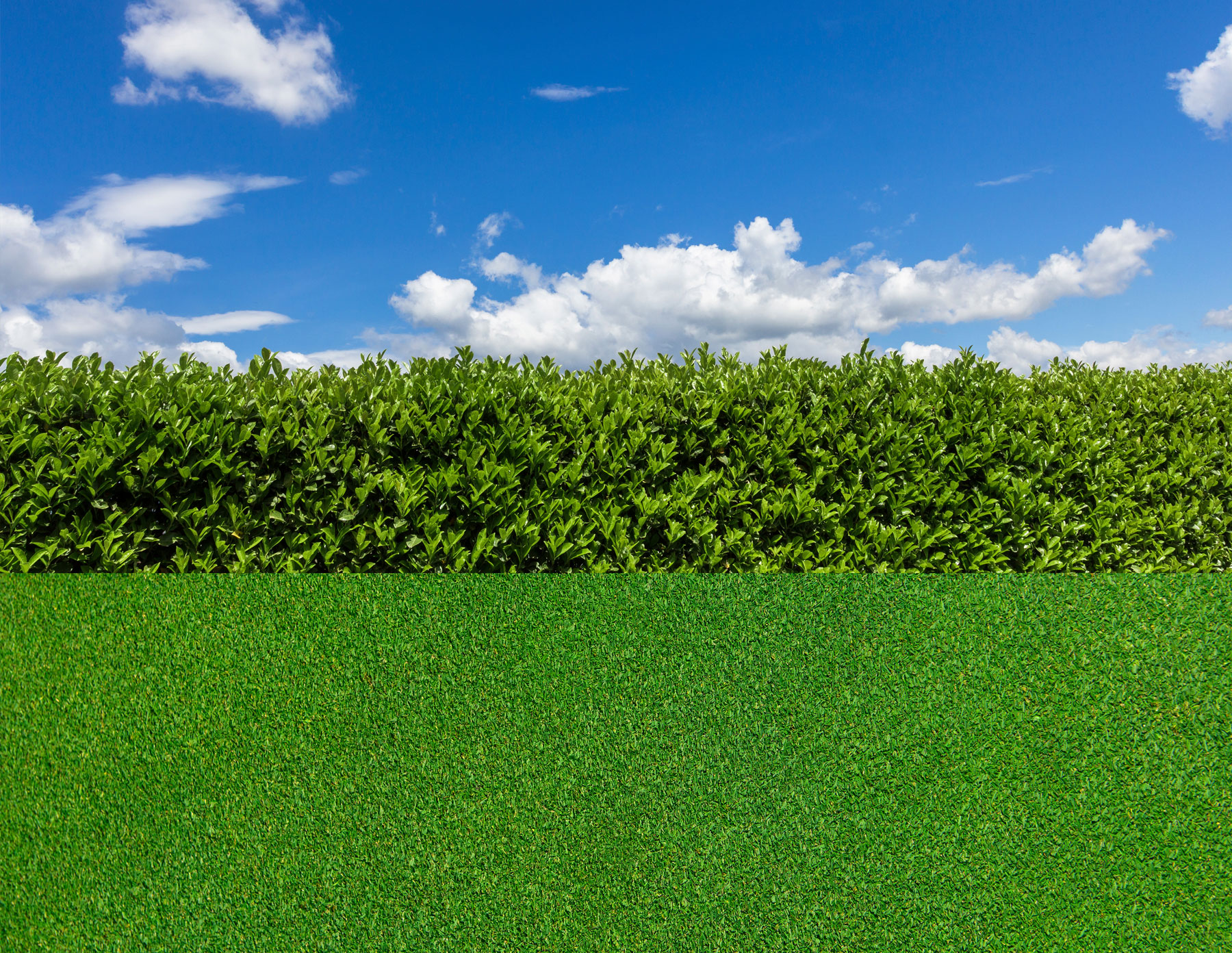 Spring lawn care tips for a green lawn and yard